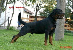 Vanaheim Rottweiler, Rottweiler